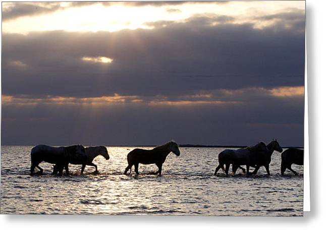 Wild Horses Greeting Cards - Sunrise Horses Greeting Card by Carol Walker