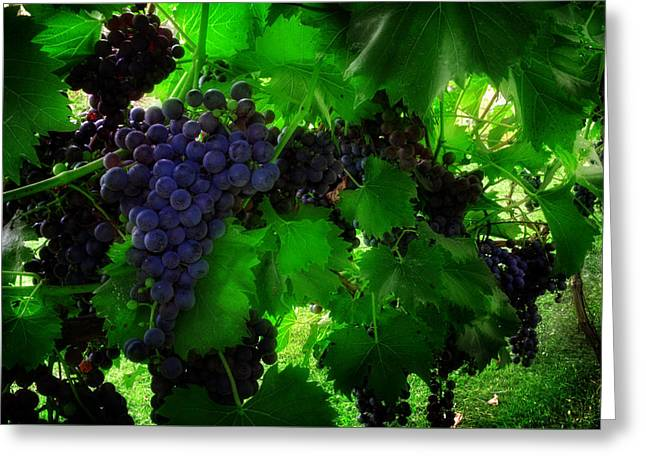 Sunrise In The Vineyard Greeting Card