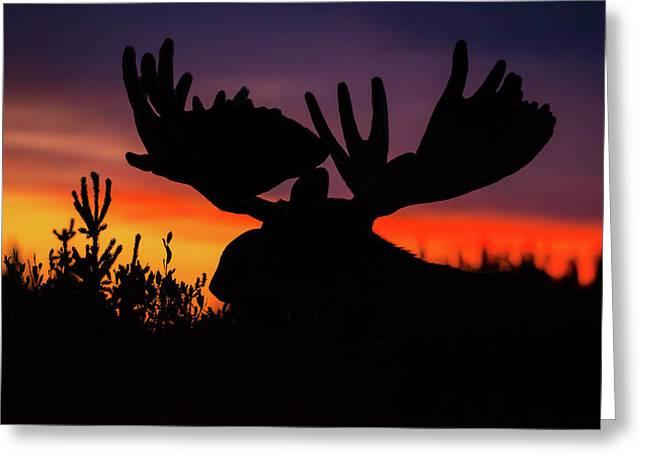 Sunrise King Greeting Card
