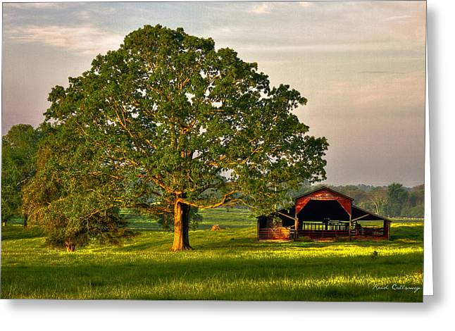Sunrise Oak 2 The Red Barn Art Greeting Card