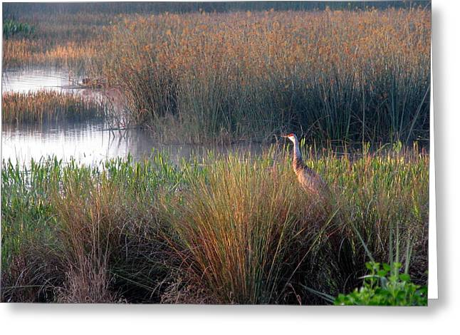 Sunrise On The Wetlands Greeting Card