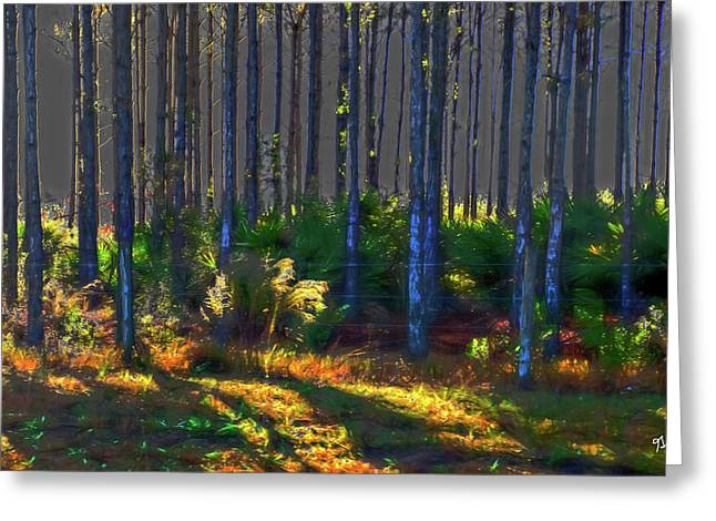 Sunrise On Tree Trunks Greeting Card