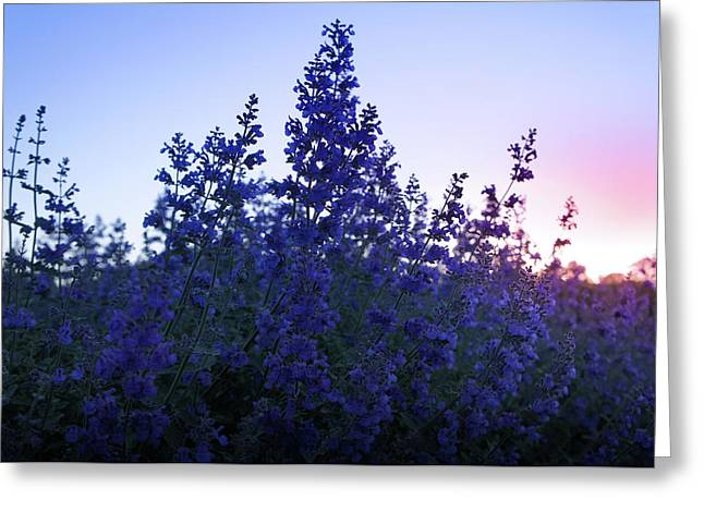 Sunrise Over Beautiful Lavender Field Greeting Card by Art Spectrum