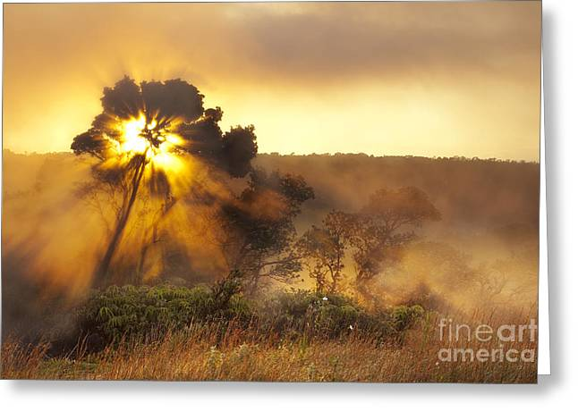 Greeting Card featuring the photograph Sunrise Over Hawaii Volcano Steam Vents by Charmian Vistaunet