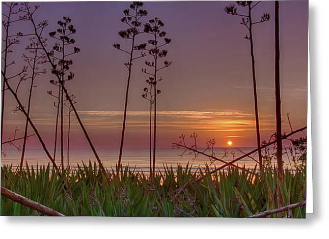 Sunrise Palm Blooms Greeting Card