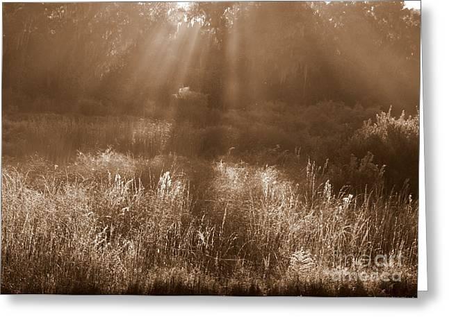 Sunrise Sepia Greeting Card by Carol Groenen