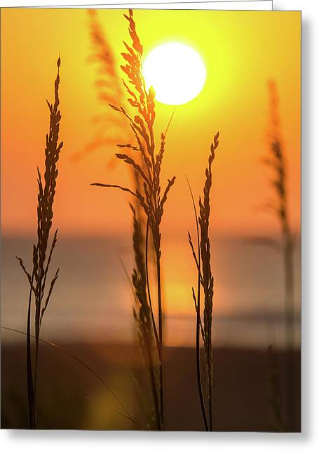 Sunrise Serenity Greeting Card by AM Photography