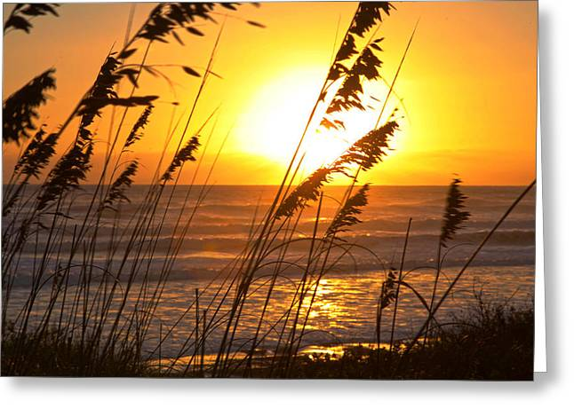 Sunrise Silhouette Greeting Card by Robert Och