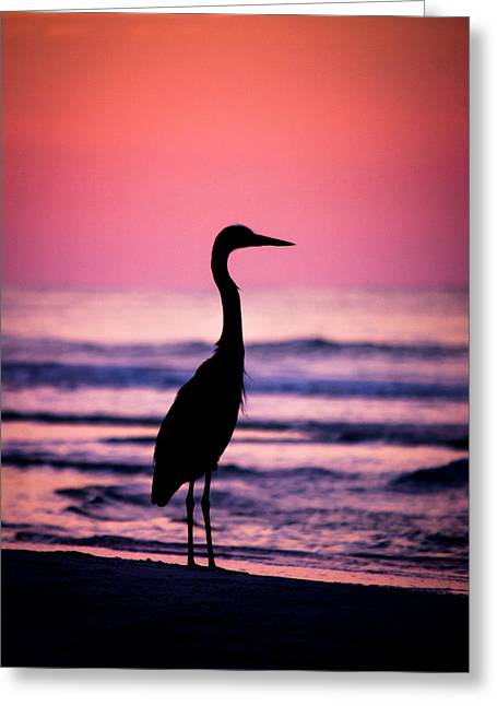 Sunrise Silhouette Greeting Card by Shelby Young