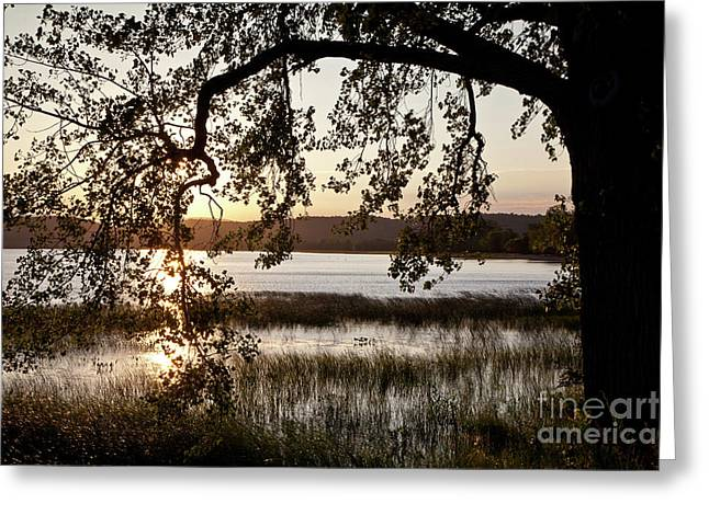 Greeting Card featuring the photograph Sunrise Silhouette by Susan Cole Kelly