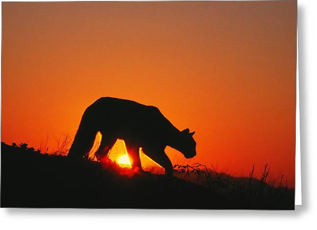 Sunrise Stalk Greeting Card