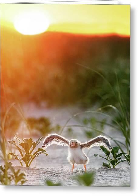 Sunrise Stretch Greeting Card