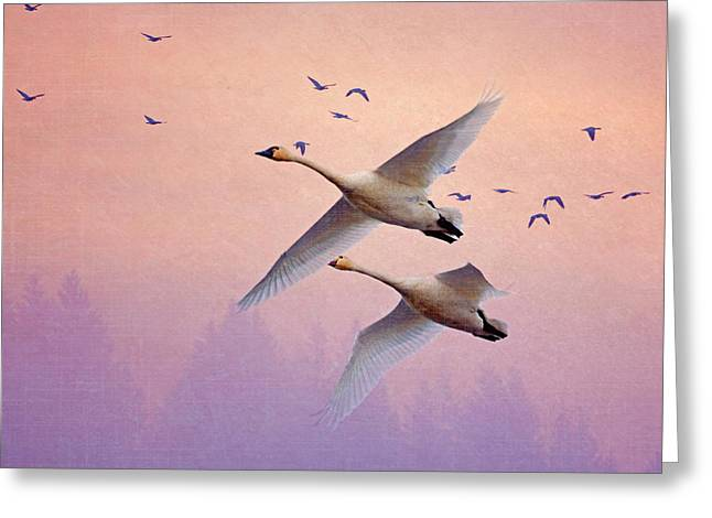 Sunrise Swans Greeting Card by Angie Vogel