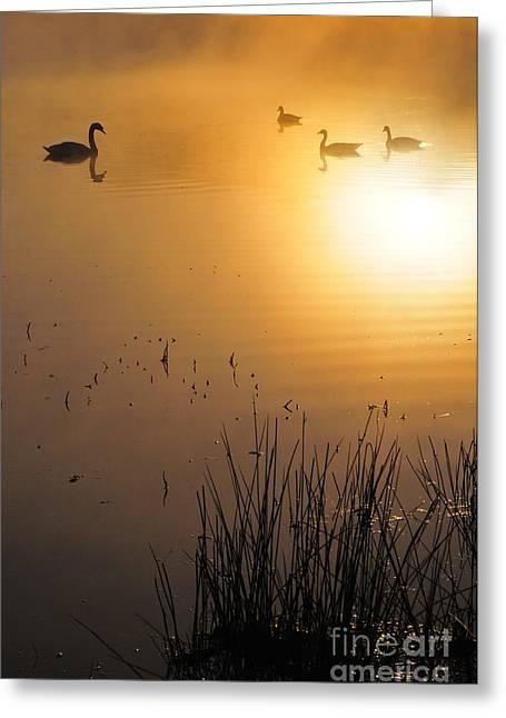 Sunrise Swim Greeting Card by Catherine Reusch Daley