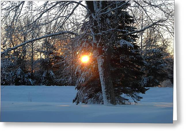 Sunrise Through Branches Greeting Card