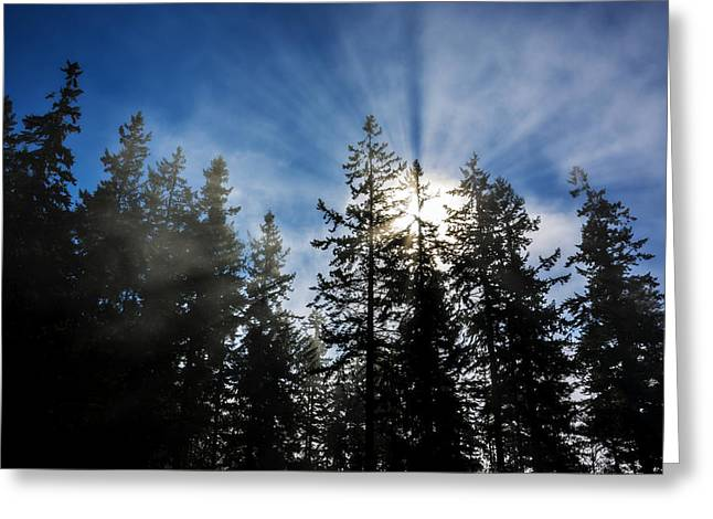 Sunrise Through Trees Greeting Card by Pelo Blanco Photo