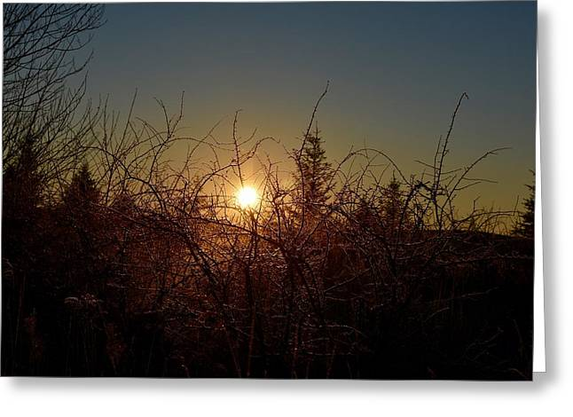 Sunrise Thru The Brush Greeting Card