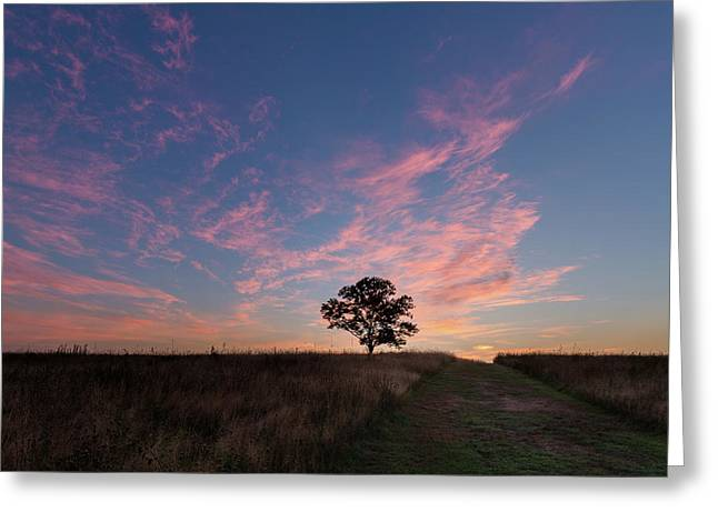 Sunrise Tree 2016 Square Greeting Card by Bill Wakeley