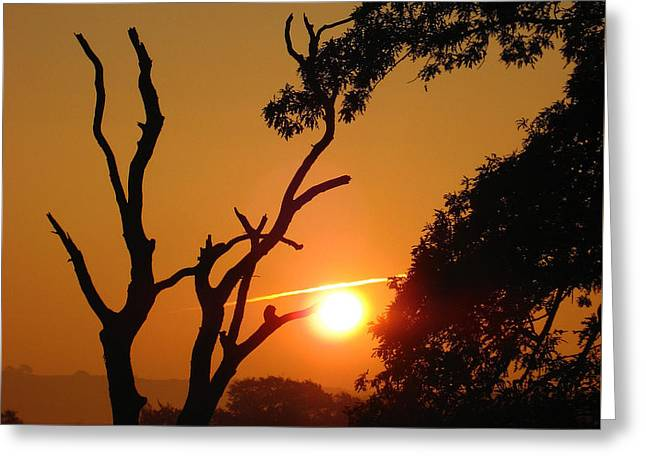 Sunrise Trees Greeting Card by RKAB Works