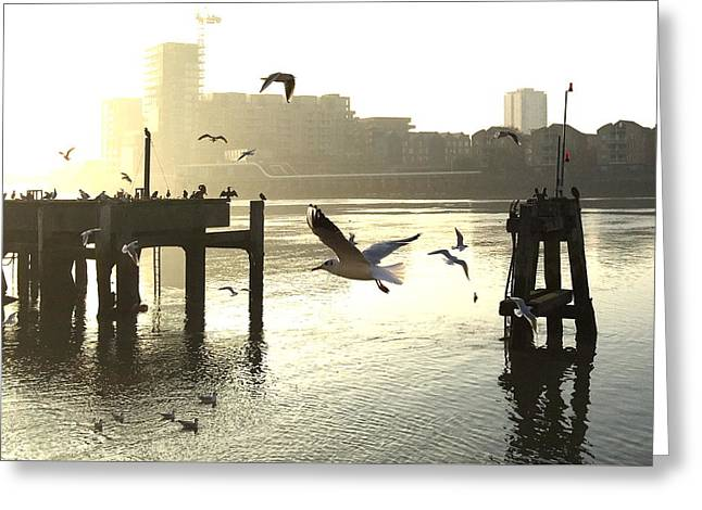 Sunrise With Seagulls Greeting Card