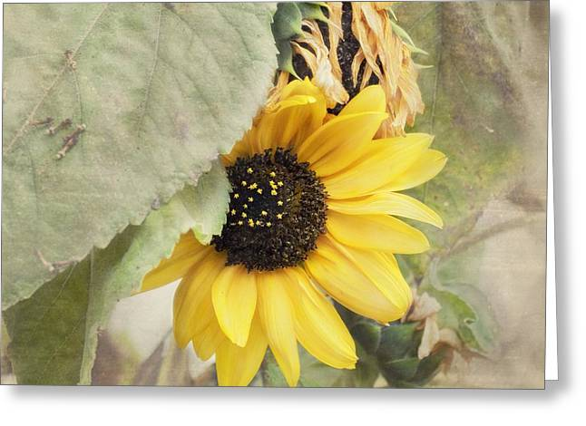 Last Sunflower Greeting Card