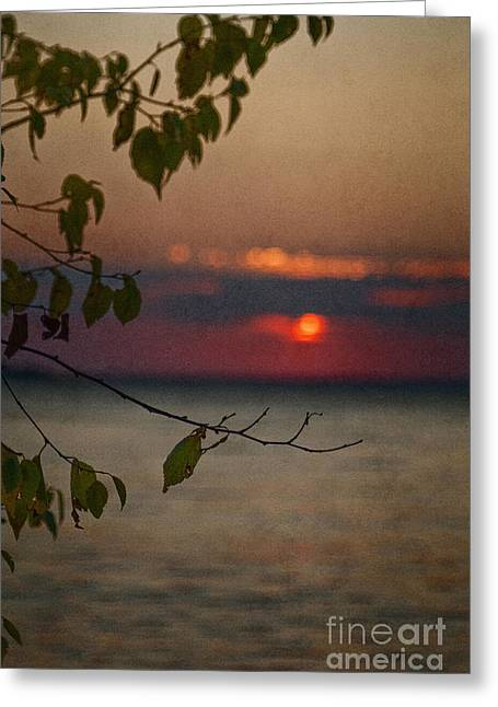 Sunset And Branches Greeting Card