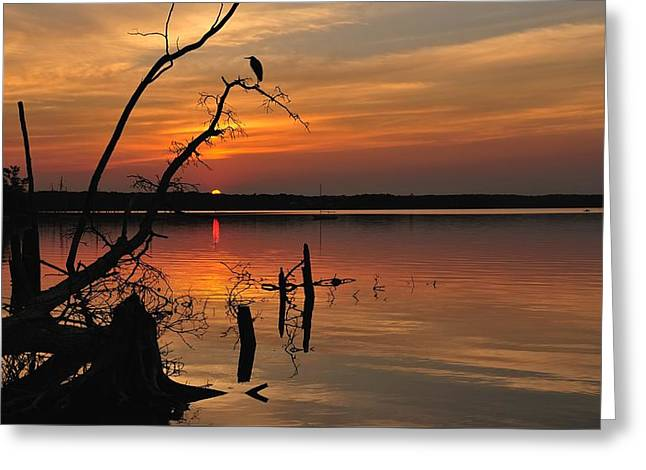 Greeting Card featuring the photograph Sunset And Heron by Angel Cher