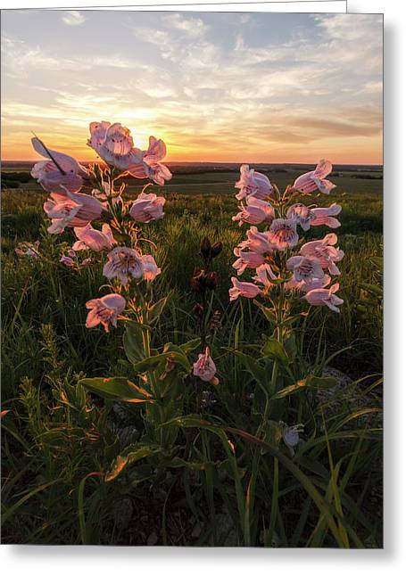 Sunset And Penstemon Greeting Card