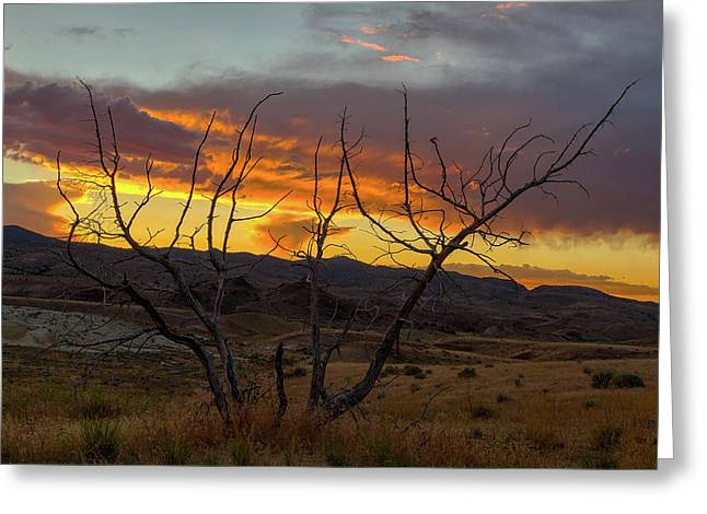Sunset And Petrified Tree Greeting Card by David Gn