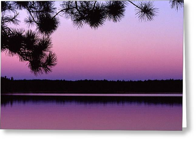 Greeting Card featuring the photograph Sunset And Pine 2 by Lyle Crump