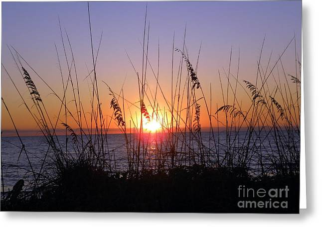 Greeting Card featuring the photograph Sunset And Seaoats by Terri Mills