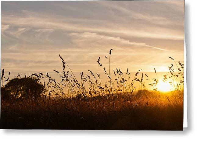 Sunset And Wheat Field Greeting Card