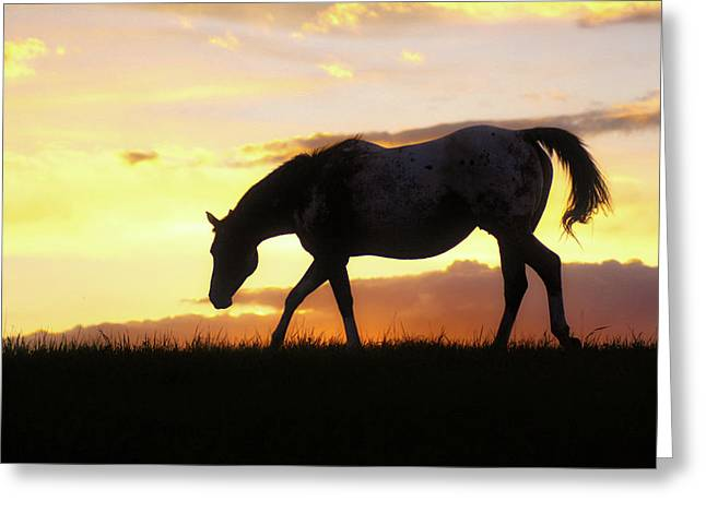 Sunset Appy Greeting Card
