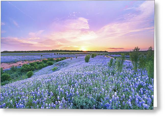 Sunset At A Bluebonnet Field Greeting Card