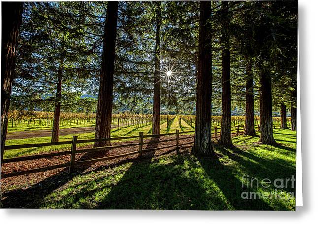 Sunset At Far Niente Greeting Card by Jon Neidert