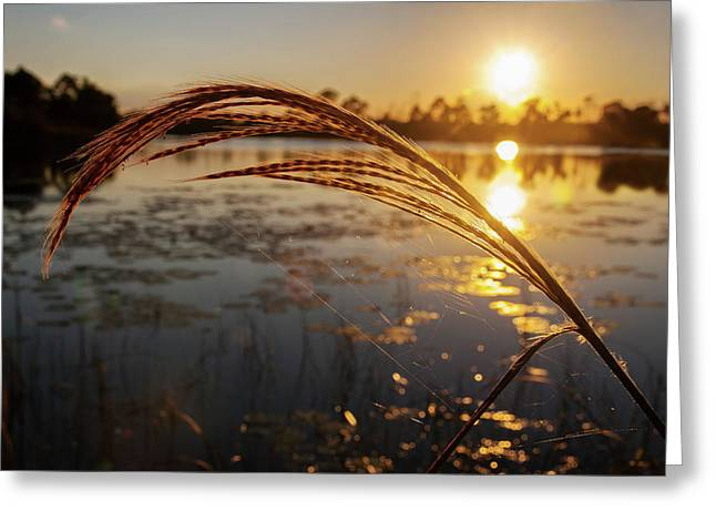 Greeting Card featuring the photograph Sunset At Gator Hole 2 by Arthur Dodd