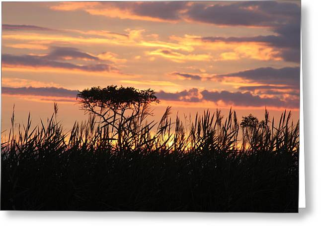 Greeting Card featuring the photograph Sunset At Ocean City by Vadim Levin