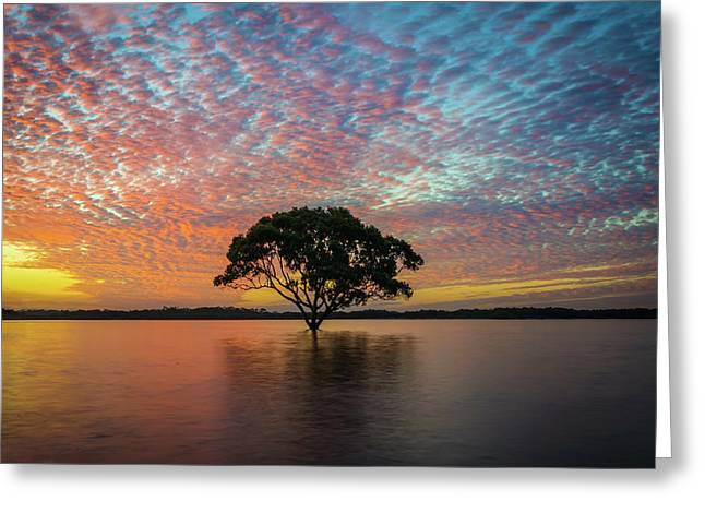 Greeting Card featuring the photograph Sunset At The Brighton Tree by Keiran Lusk