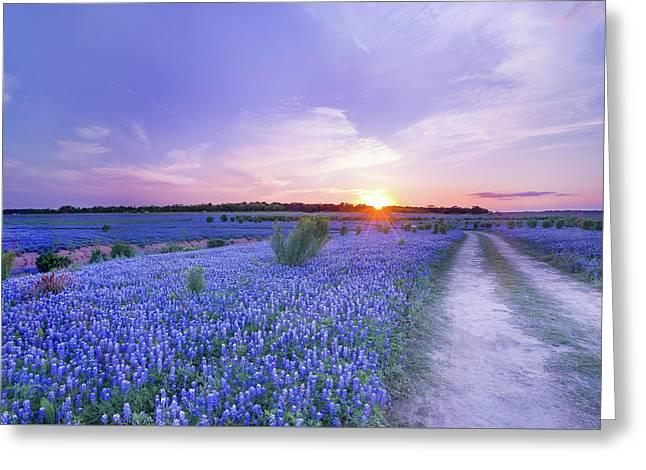 Sunset At The End Of Bluebonnet Field - Texas Greeting Card