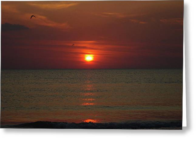 Sunset At The Tradewinds Greeting Card