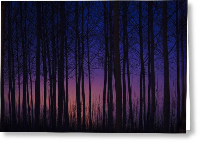 Sunset At The Tree Farm Greeting Card by Jean Noren