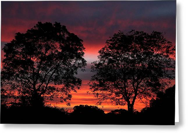 Sunset Behind Two Trees Greeting Card