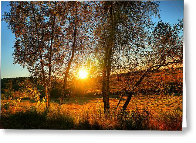 Sunset Between Two Birches Greeting Card by Lilia D