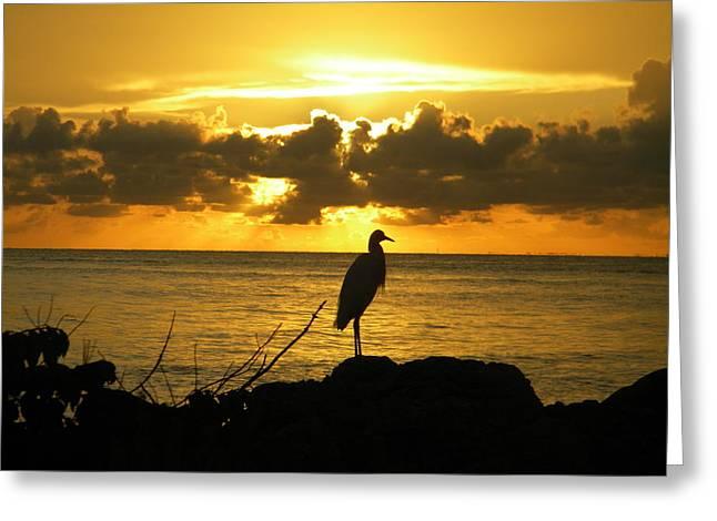 Sunset Bird Greeting Card