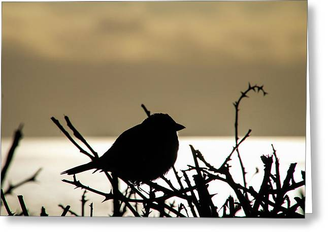 Sunset Bird Silhouette Greeting Card
