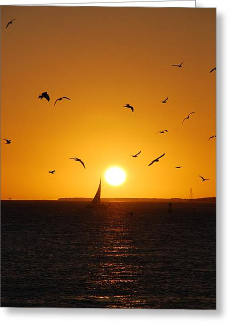 Reflections Of Sun In Water Greeting Cards - Sunset Birds Key West Greeting Card by Susanne Van Hulst