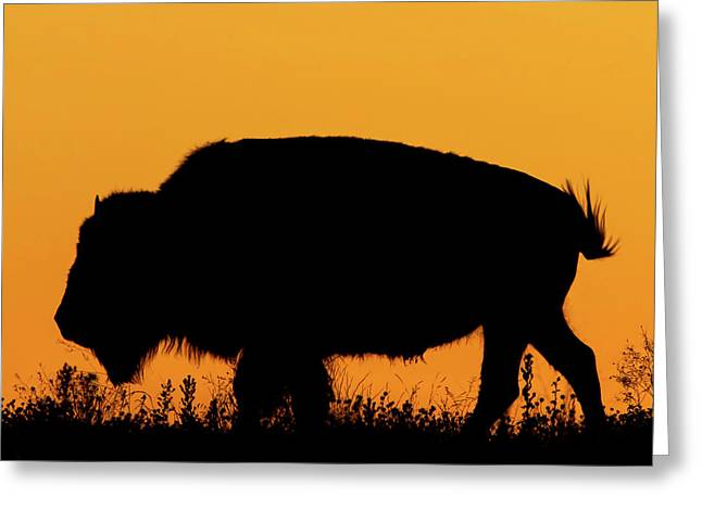 Sunset Bison 2 Greeting Card