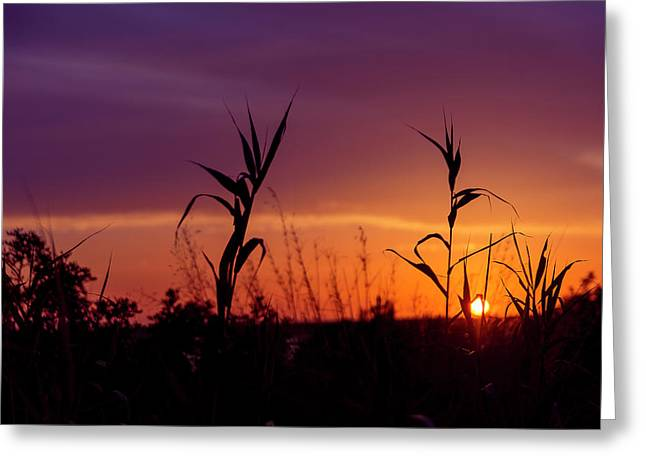 Greeting Card featuring the photograph Sunset Colours by Nikos Stavrakas