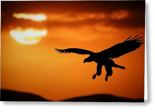 Sunset Eagle Greeting Card by Riana Van Staden