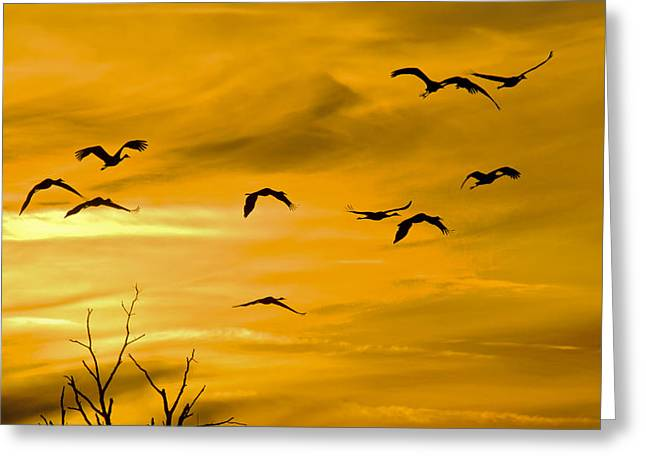 Sunset Fliers Greeting Card